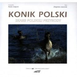 Konik polski. Skarb polskiej przyrody