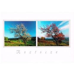 Roztocze - drzewo