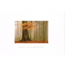 Roztocze - jesień na Bukowej Górze