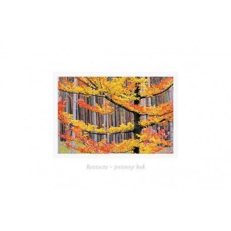 Roztocze - jesienny buk